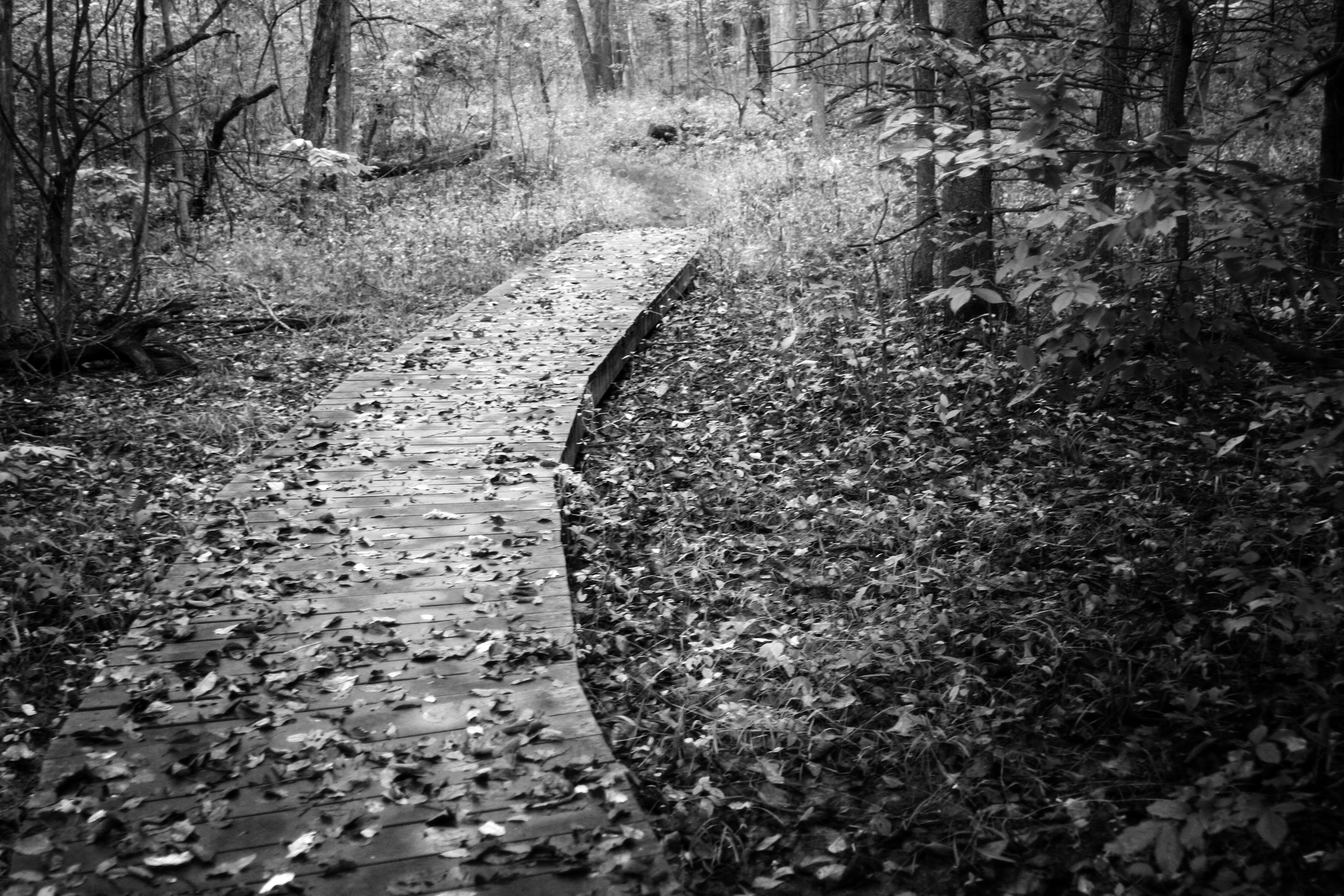 forest path bw
